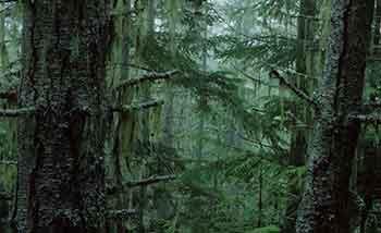 ser inte skogen för alla träden